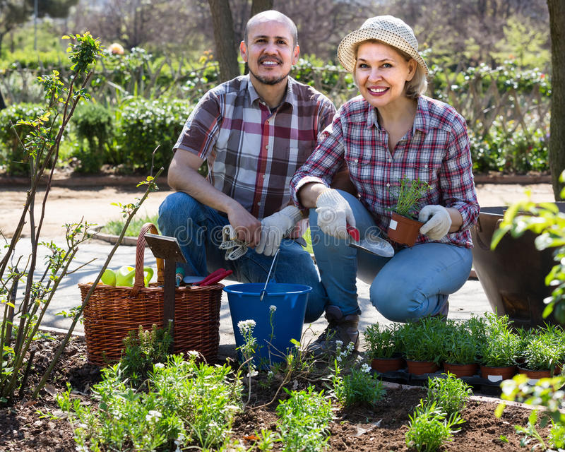 Портрет симпатичной старшей пары принимая заботе зеленых растений i стоковая фотография rf