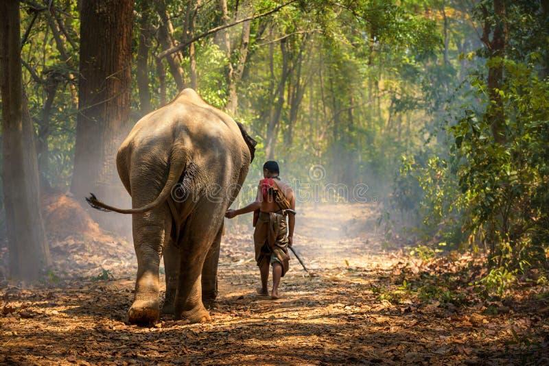 Портрет слона Махаут и слон в Сурине, старик с слоном в лесу Сурин, Таиланд. стоковая фотография