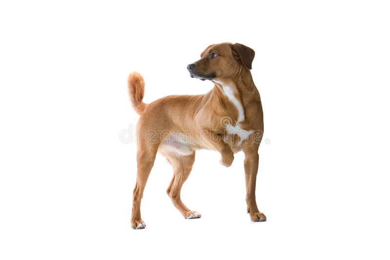 портрет собаки большой стоковое фото rf