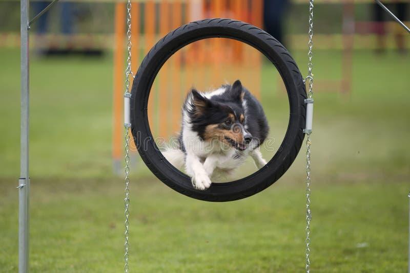Портрет собаки в рамке стоковые фото