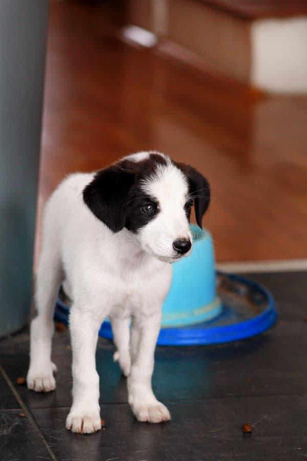 Портрет собаки маленького щенка женской представляет для фотосессии, конца вверх Малая смешанная порода, прелестные щенята и поло стоковое изображение