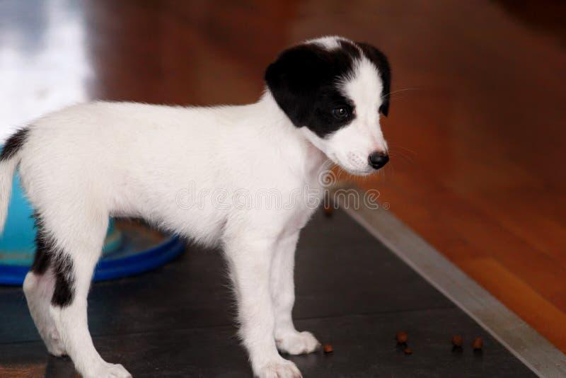 Портрет собаки маленького щенка женской представляет для фотосессии, конца вверх Малая смешанная порода, прелестные щенята и поло стоковые изображения rf