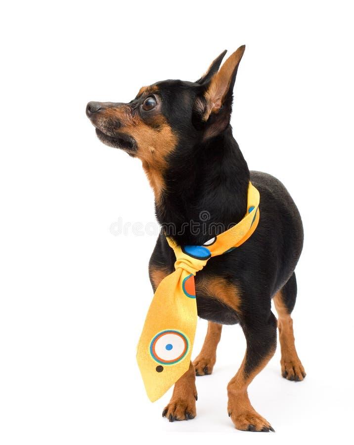Портрет собаки способа стоковое фото