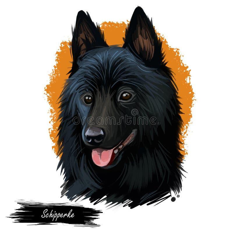Портрет собаки Шипперке изолированный на белизне Иллюстрация искусства цифров сети руки вычерченной, печати футболки и дизайна кр бесплатная иллюстрация