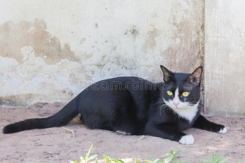 Портрет стороны черного кота страшный зловещий стоковая фотография rf