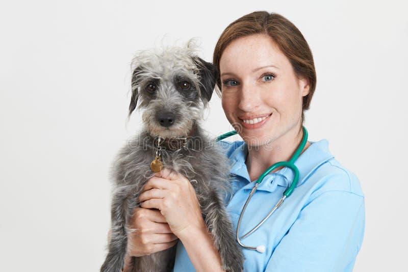 Портрет студии женского ветеринарного хирурга держа собаку Lurcher стоковая фотография rf
