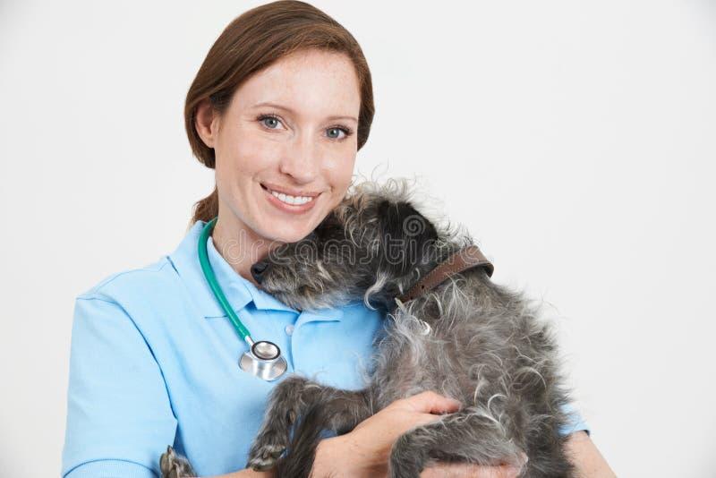 Портрет студии женского ветеринарного хирурга держа собаку Lurcher стоковые фотографии rf