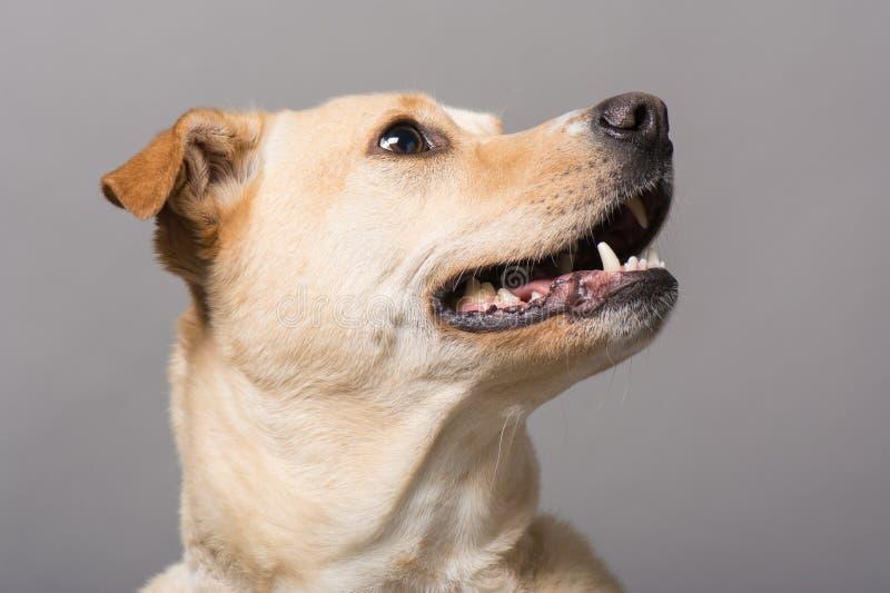 Портрет студии собаки стоковое изображение