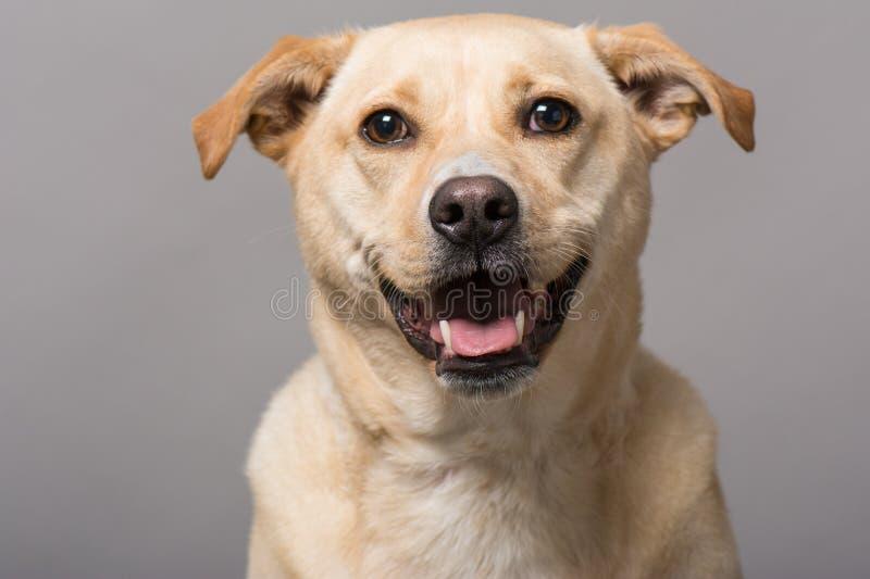 Портрет студии собаки стоковые изображения