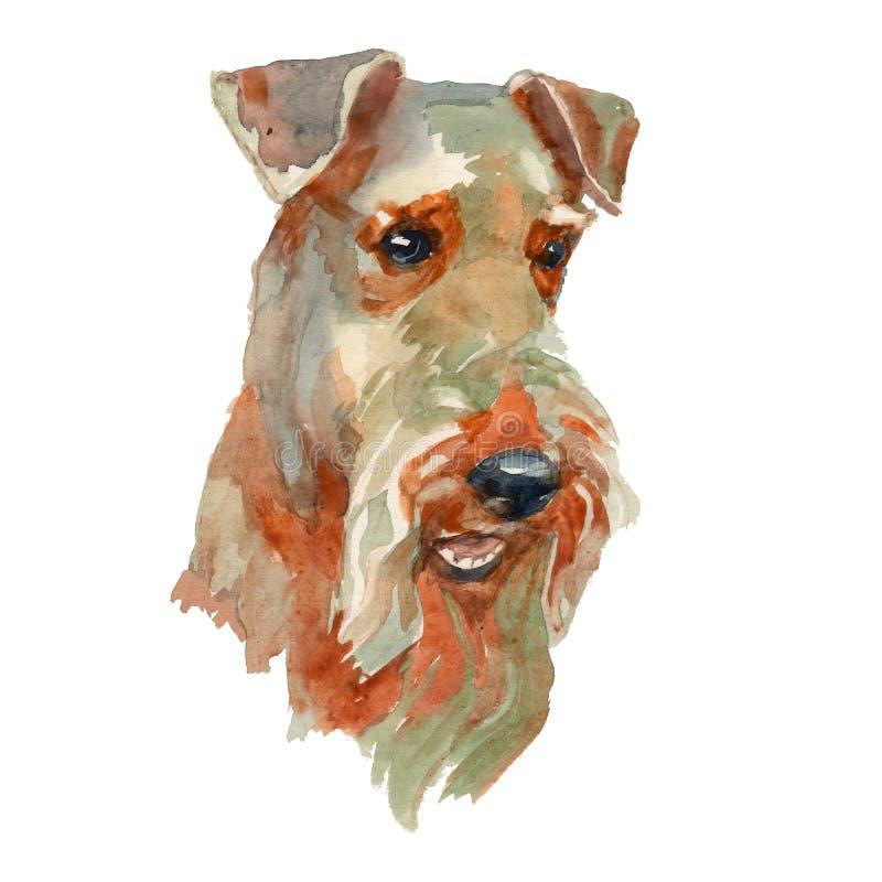 Портрет терьера Welsh иллюстрация вектора