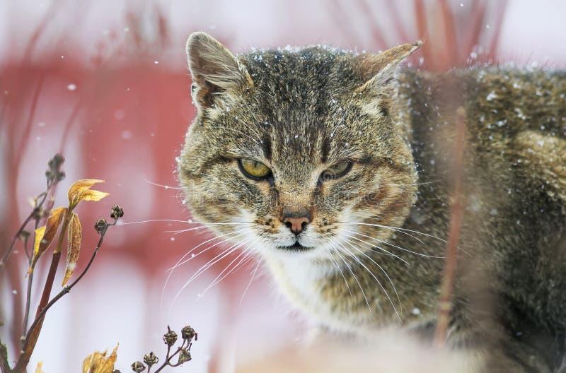 Портрет ужасного рассеянного кота во время снежности стоковое фото