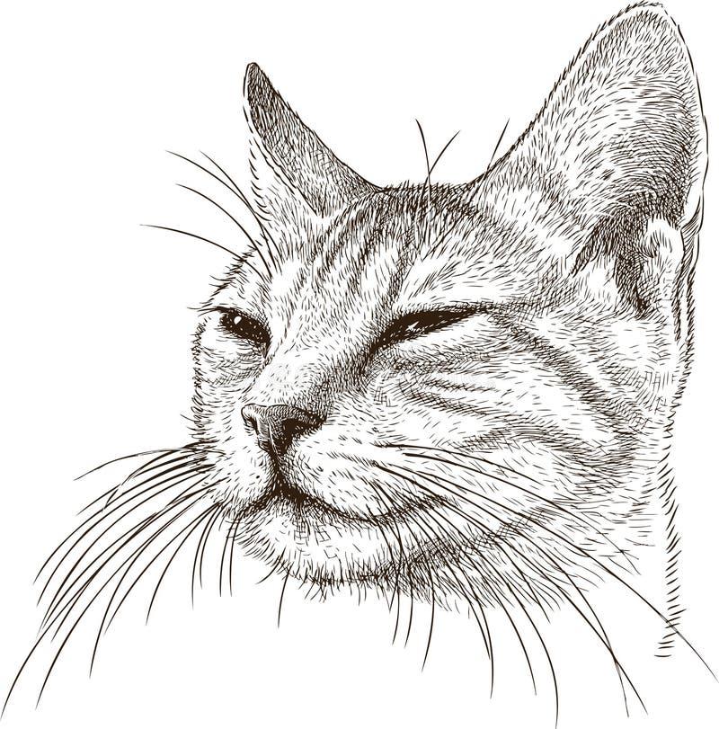 Портрет лукавого кота бесплатная иллюстрация