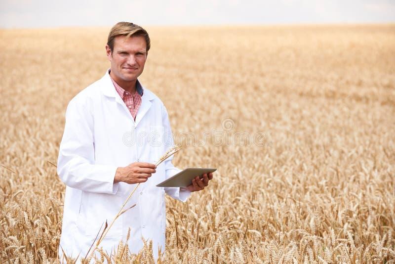 Портрет ученого с урожаем пшеницы планшета цифров рассматривая в поле стоковая фотография