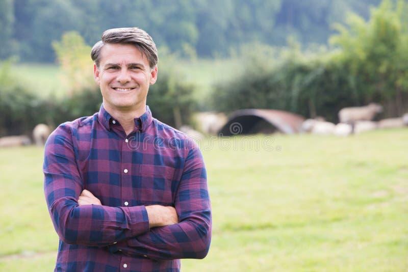 Портрет фермера в поле с овцами стоковое изображение