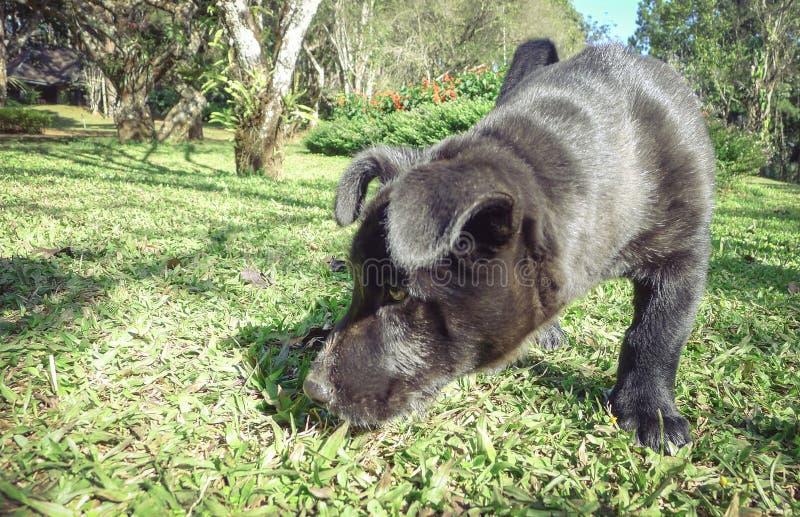 Портрет черного щенка играя на траве , фокус пятна, изображение стоковое изображение rf