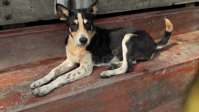 портрет s собаки стоковое изображение rf