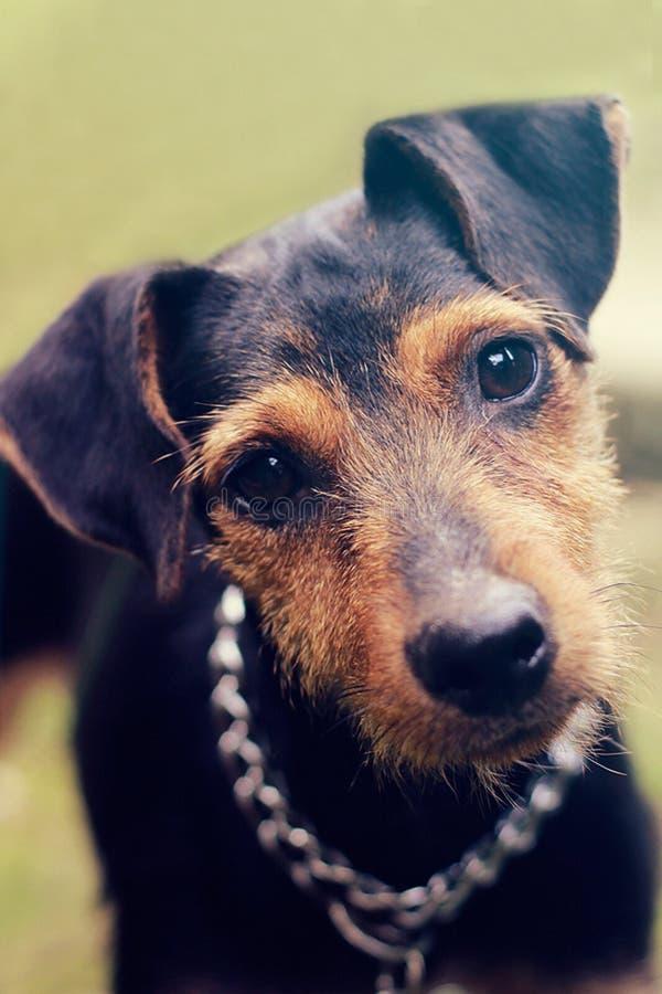 портрет s собаки