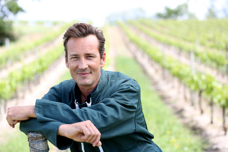 Портрет vinegrower в виноградниках стоковые фото
