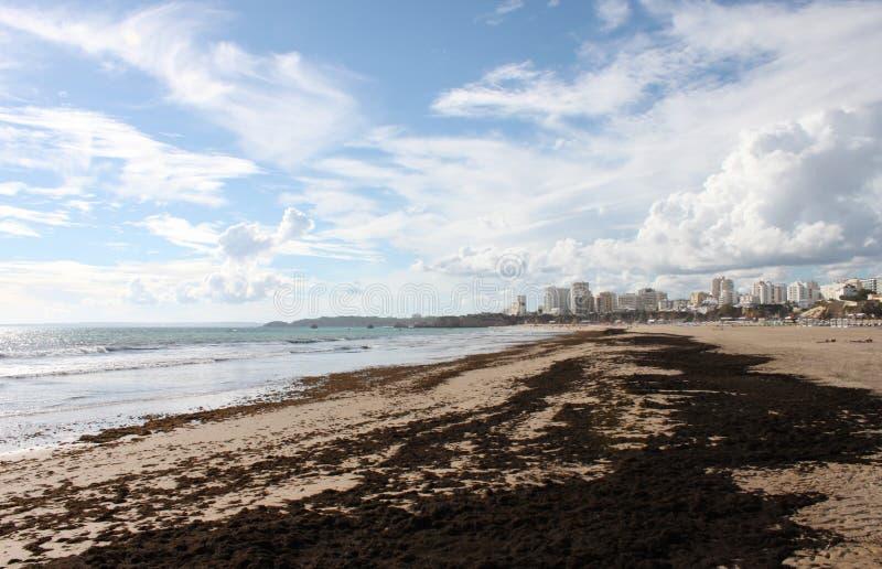 Португалия, Алгарве, Portimao, Прая da Rocha Пристаньте к берегу после шторма с морской водорослью на песке, горизонтальным взгля стоковые фото