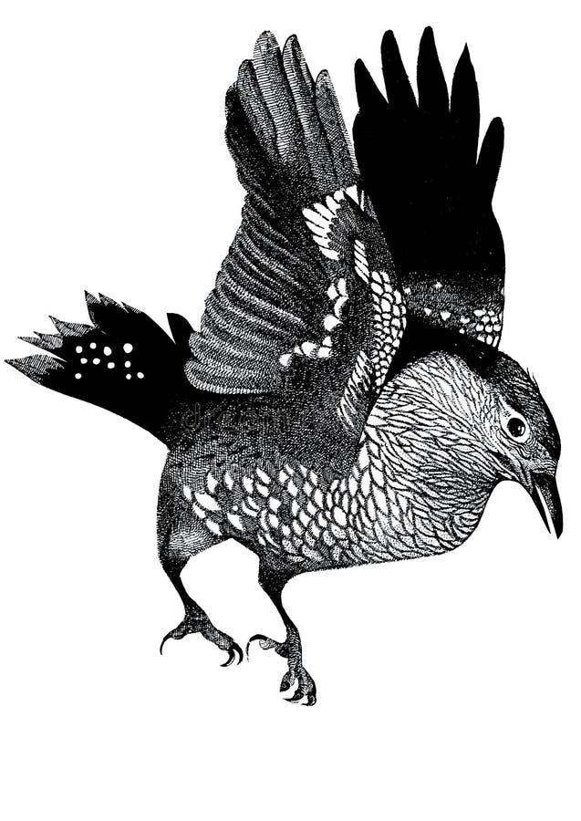 посадка птицы иллюстрация вектора
