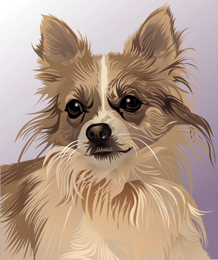 посвященное визирование собаки стоковые изображения