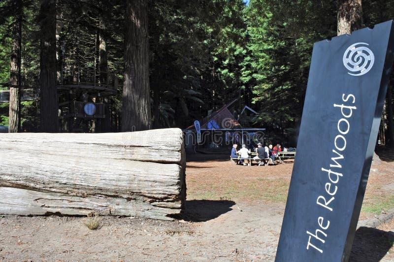 Посетители на гигантских лесах Новой Зеландии redwood стоковые фотографии rf