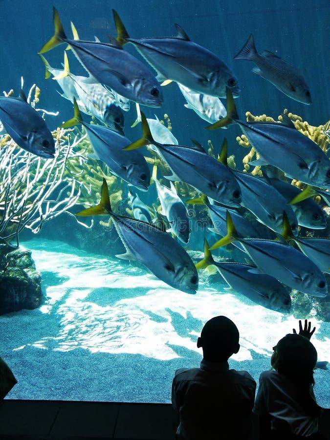 посещение аквариума стоковая фотография rf