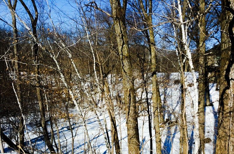 Последние древесины зимы стоковое изображение rf