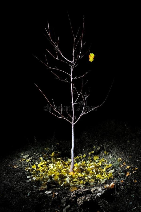 последние листья стоковые фотографии rf