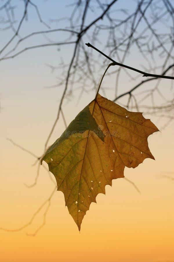 последние листья стоковая фотография