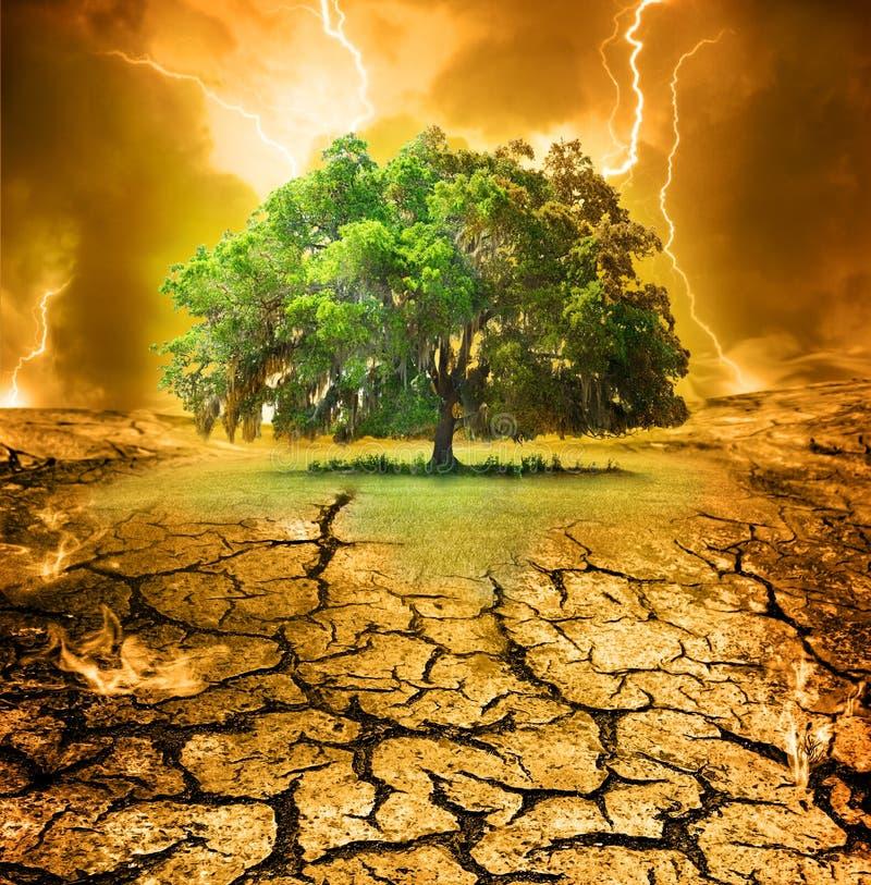 последний дуб стоковое фото rf