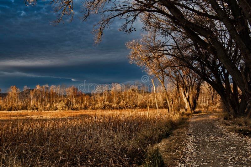 Последний путь в ноябре прудом стоковые фото