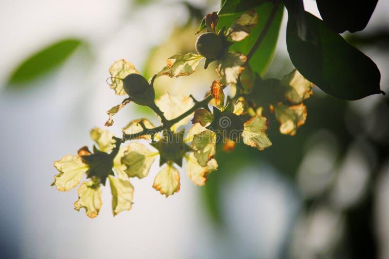Последний цветок uinique в озере Hoankiem стоковое фото rf