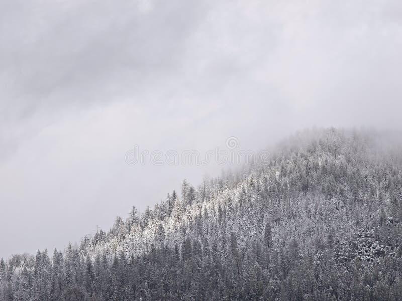 последняя долина yosemite шторма весны снежка стоковое фото
