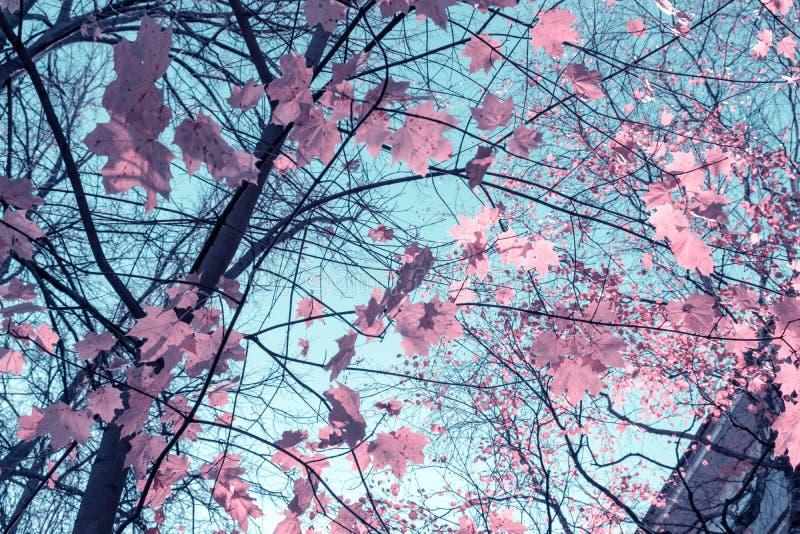 Последняя осень, редкие листья осени на дереве против голубого неба стоковая фотография