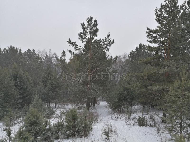 Последняя осень Сибиря Взбираться снежные горы стоковая фотография