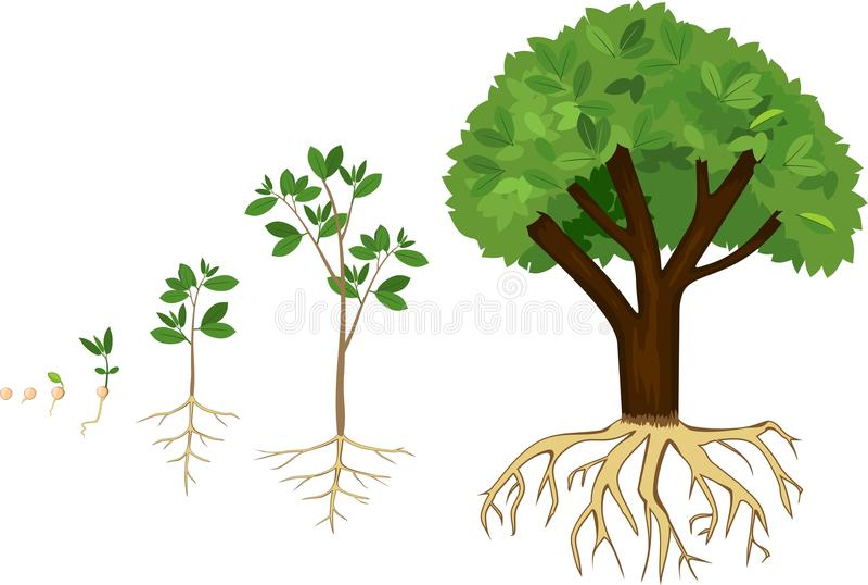 картинка как растет дерево предусмотрели прямую