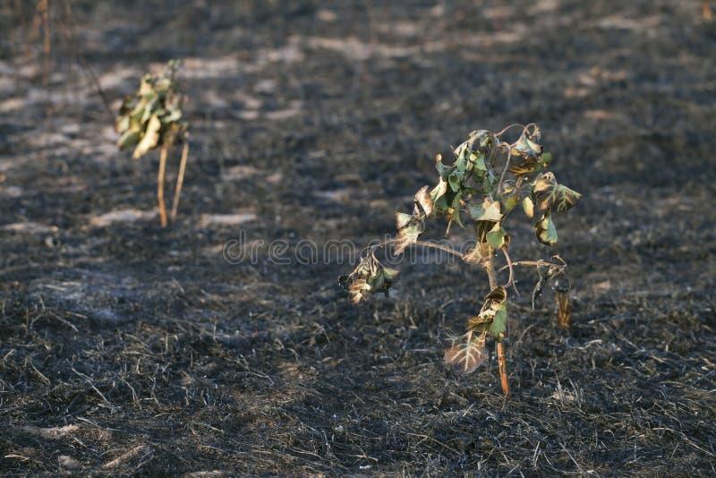 После лесного пожара стоковые фото