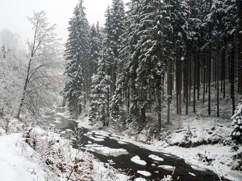После снежностей зимы стоковая фотография