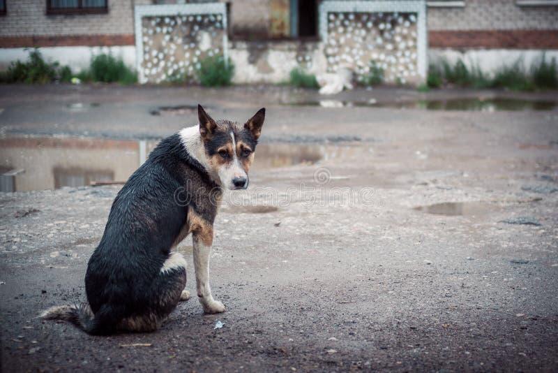 Посмотрите бездомной собаки сидя на улице под лить дождем стоковое фото