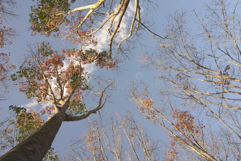 Посмотрите вверх от древесин стоковые изображения