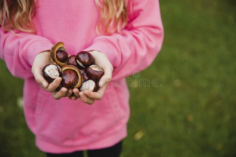 Посмотрите весь из этих плодов конского каштана стоковое фото rf