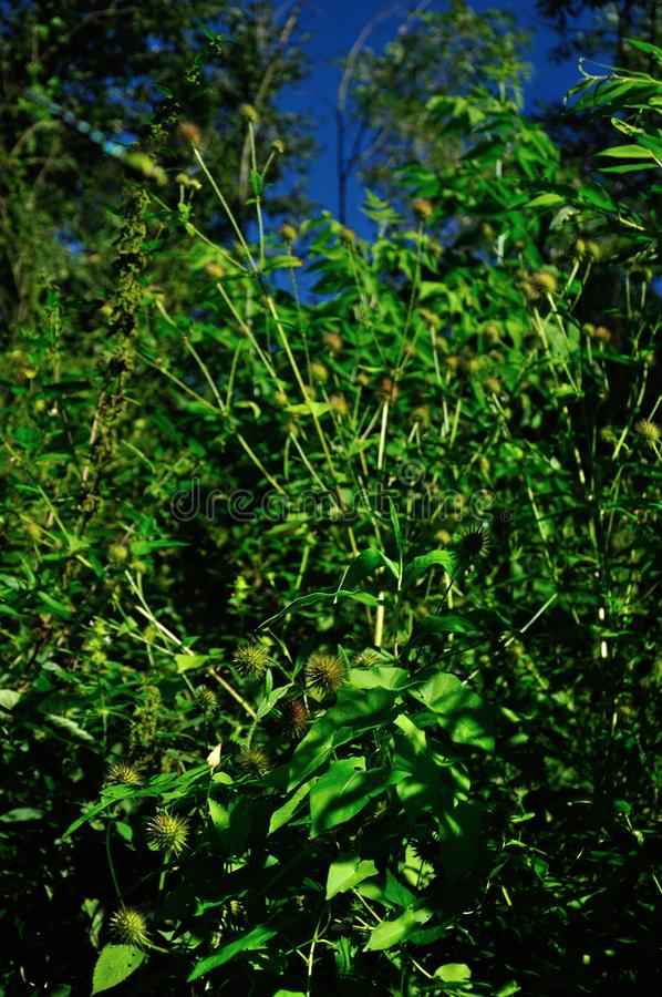 Посмотрите в дикую природу стоковое изображение rf