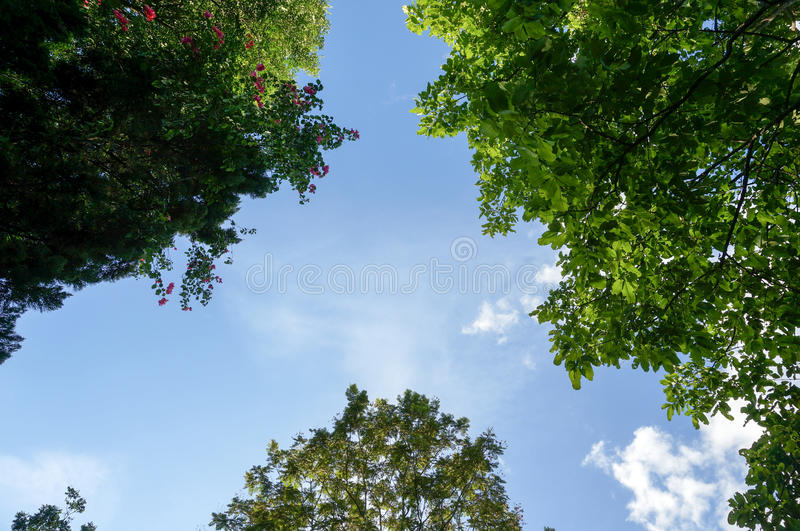 Посмотрите до небо и деревья стоковые фото