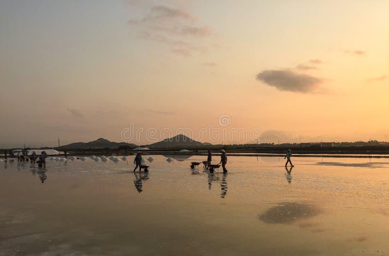 Посолите поле в посёлке Ninh Hoa, Вьетнаме стоковое изображение