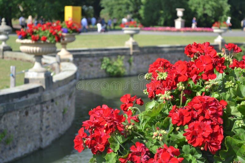 Постамент цветка стоковое изображение rf