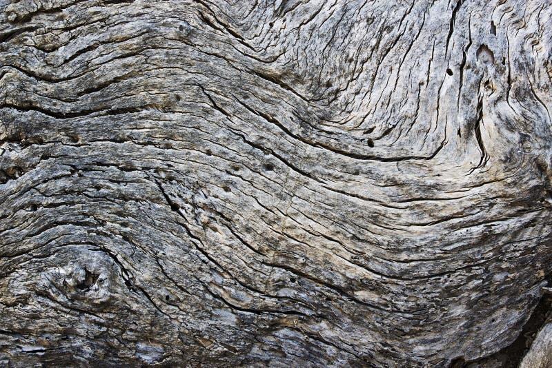 Постаретая и снованная древесина стоковое фото rf