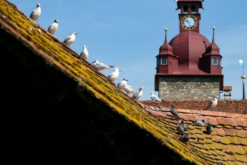 Постриженная крыша Люцерн стоковая фотография