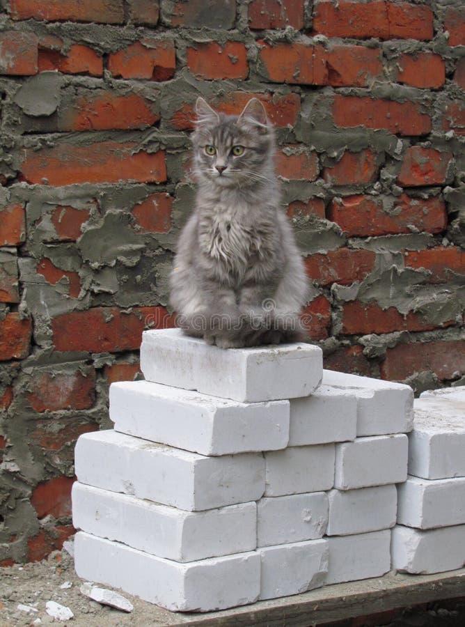 Построитель котенка стоковые фотографии rf