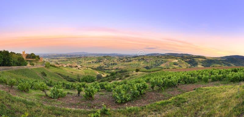 После захода солнца, панорама виноградников божоле, Франции стоковое фото rf